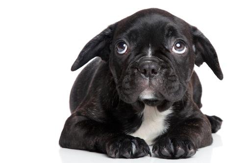 cane paura tuoni