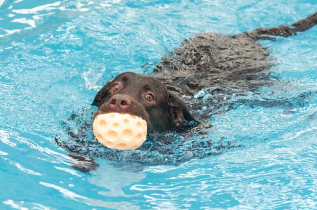 Risultati immagini per piscina per cani milano