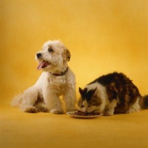 inappetenza canina