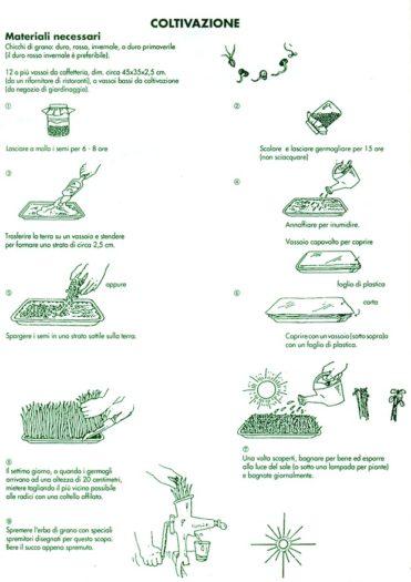 autoproduzione erba di grano wheatgrass