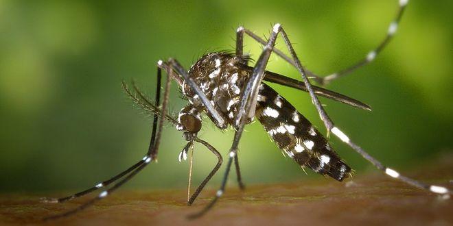malaria in italia