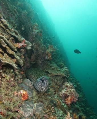 fondali oceanici mauritius
