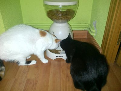 dispenser cibo gatti