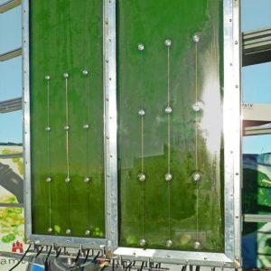 alghe facciata