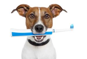 spazzolino denti cani
