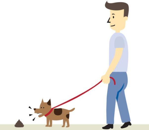 coprofagia cani