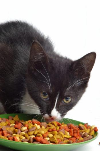 Cibo secco o umido per i nostri gatti la dieta migliore for Migliore lettiera per gatti