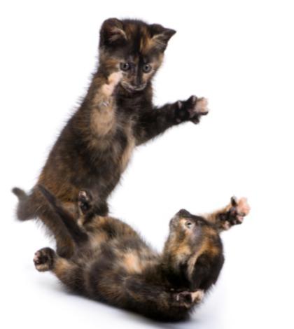 Come introdurre un nuovo gatto in casa - Che malattie portano i gatti ...