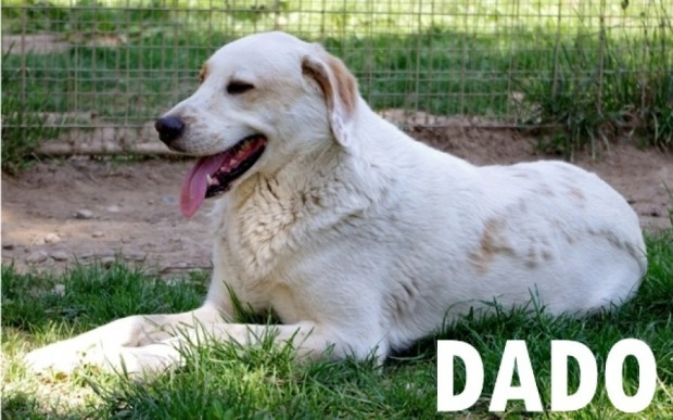 cane torna al canile