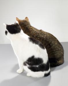 convivenza gatti