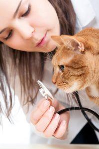 visite veterinario a casa