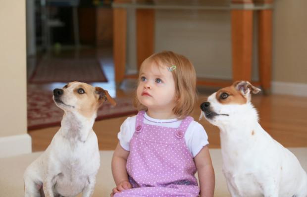 convivenza cani e bambini consigli