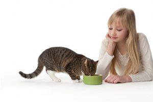 pasti gatto