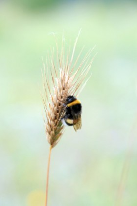 neonicotinoidi mais moria api