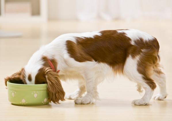 alimentazione del cucciolo cane