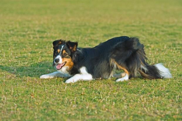 linguaggio del corpo cane