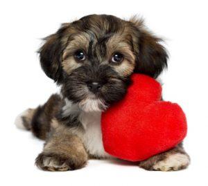cane cuore
