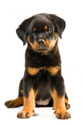 acne cani