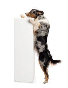 cane morde mobili