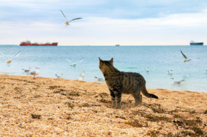 gatti mare