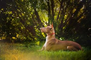 impronta ecologica cane