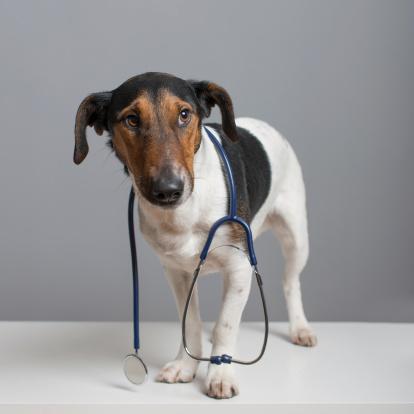 cane malato sintomi