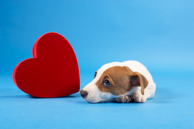 malattie cardiache nel cane