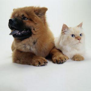 cane gatto amore