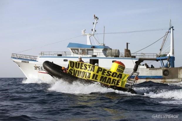 volante a coppia pesca mar mediterraneo