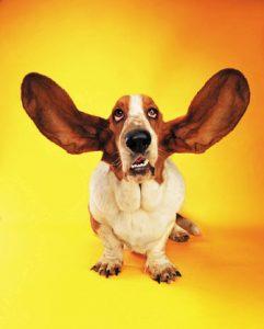 lavare orecchie cane
