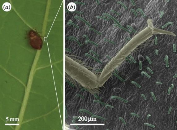 rimedi naturali cimici dei letti foglie di fagiolo