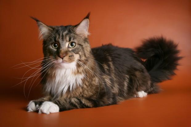 boli di pelo nel gatto