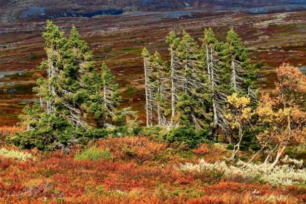 foreste boreali cambiamenti climatici