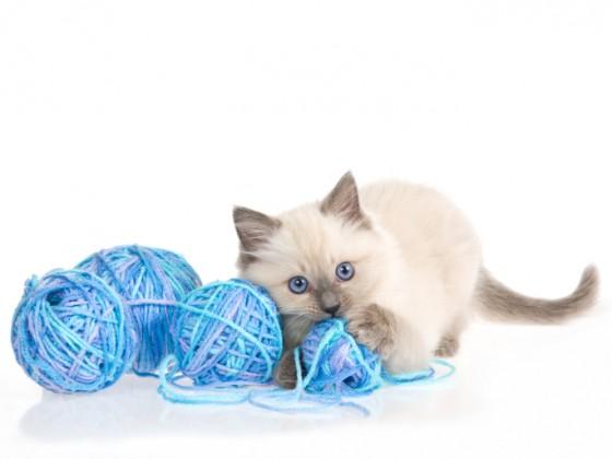 oggetti pericolosi gatto gomitoli lana
