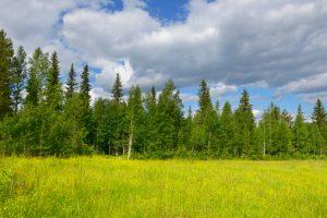 foresta migrazione nord aumento temperature globali