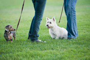 cane parco incontro altri cani