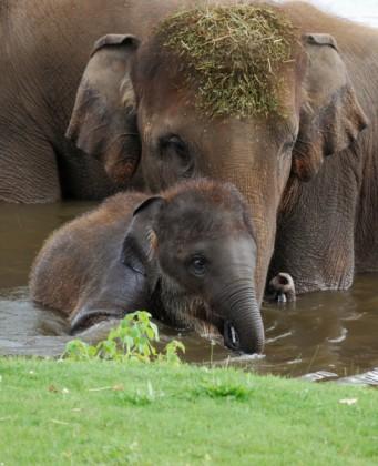 elefantino con mamma