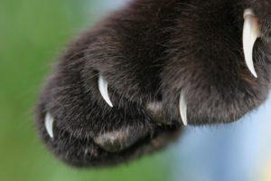 unghie micio