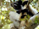primate iucn