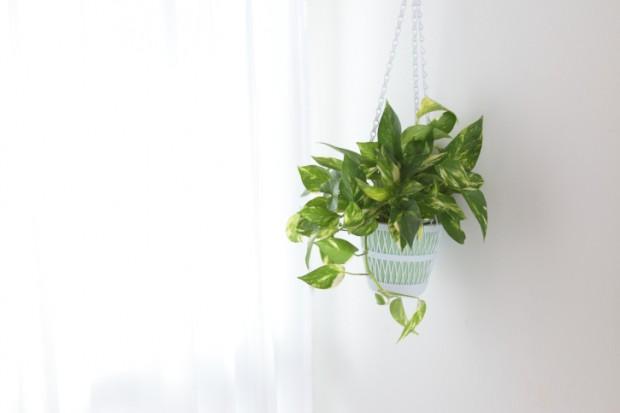 pothos piante antinquinamento da appartamento