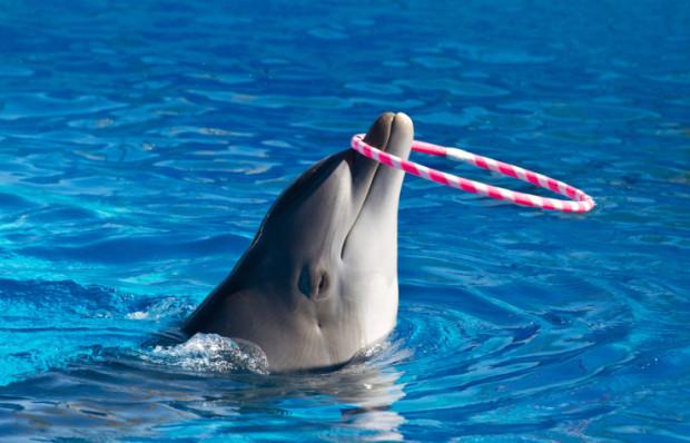 delfini in cattività nei delfinari