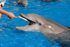 delfini pesce ricompensa