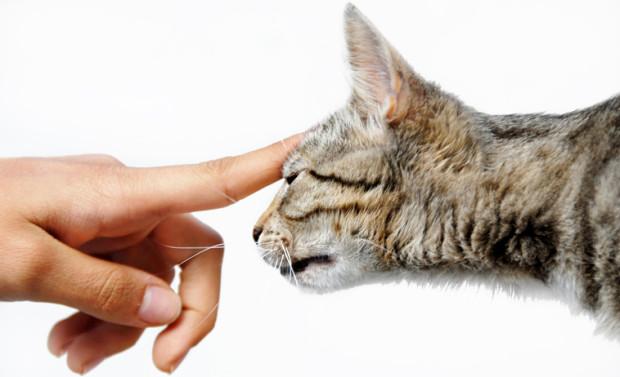 testate gatti