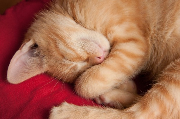 perché i gatti dormono sempre?