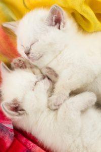sonno micini