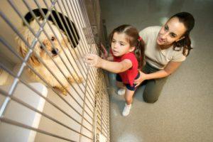 adozione cucciolo canile