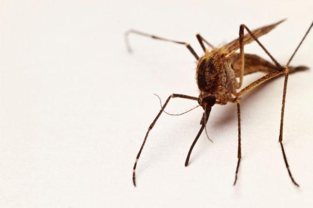 rimedi contro zanzare