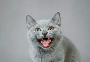 gatto troppo aggressivo cause