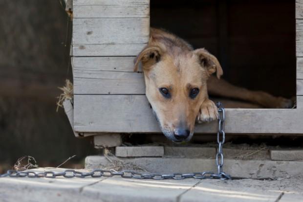 cani alla catena