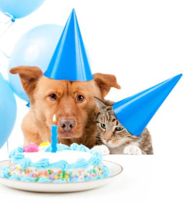età del gatto in anni umani